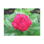 Peonie After Rain Wrapped Canvas Stretched Canvas Print