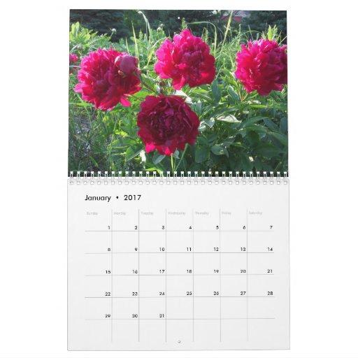 Peonies 2014 flores del calendario