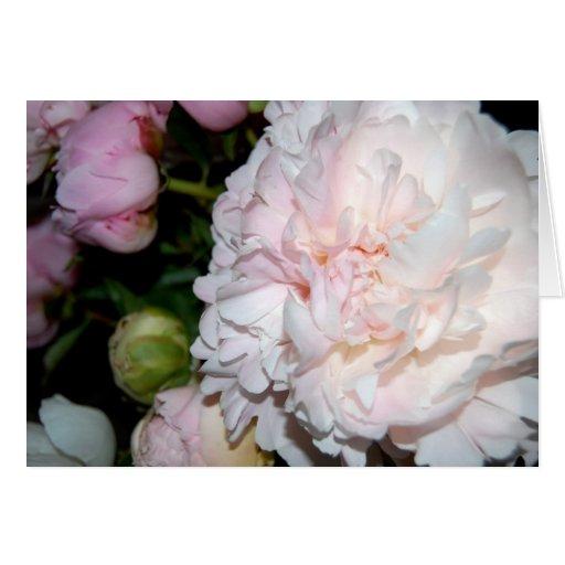 Peonies blancos y rosados tarjeta de felicitación