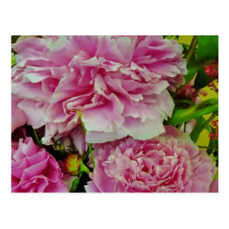 Peonies French Country Style Postcard