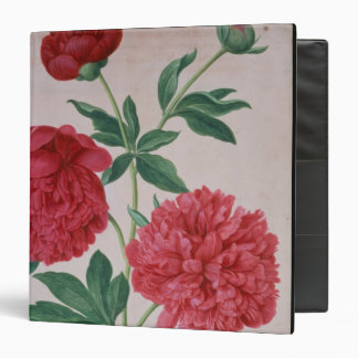 Peonies, plate 46 from the Nassau Florilegium (w/c Vinyl Binder