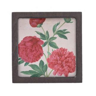 Peonies, plate 46 from the Nassau Florilegium (w/c Keepsake Box