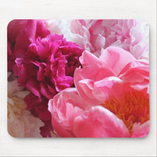 Peonies rosados y blancos en la floración - Mousep Tapete De Ratones