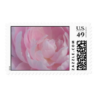 Peonies rosas claros de los sellos del boda del Pe
