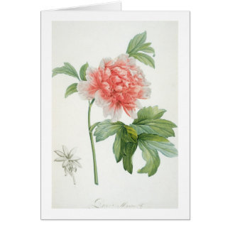 Peony, 1799 (colour stipple print) card