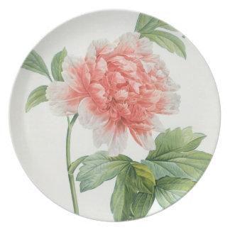 Peony, 1799 (colour stipple print) plate