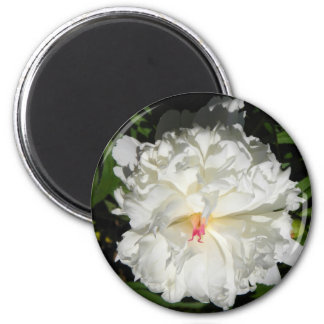 peony close up   Paeonia lactiflora Magnet
