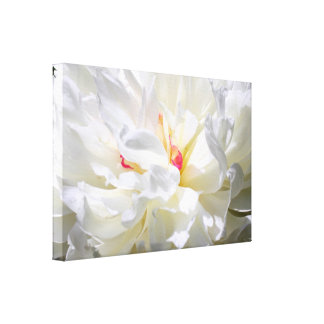 Peony Flame Photography Canvas Print