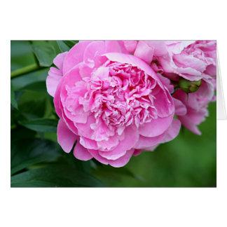 Peony flower photo card