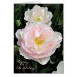 Peony flowered tulip birthday card