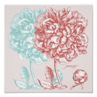 Peony Flowers Botanical Posters