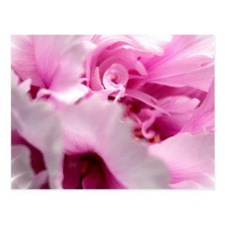 Peony Flowers Postcard