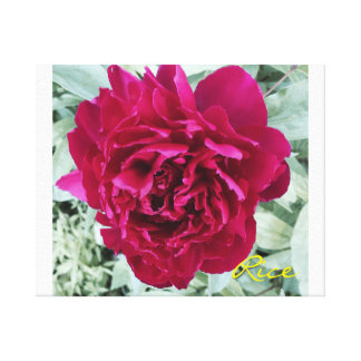 Peony in Bloom 2015 Original digital art on canvas