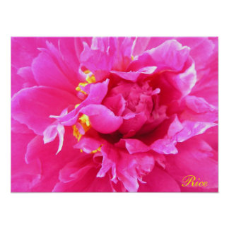 Peony in Bloom Poster/Painting Poster