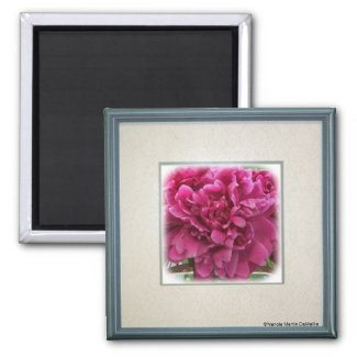 Peony Magnet magnet
