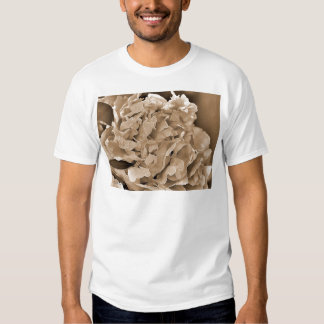 Peony named Shirley Temple Shirt
