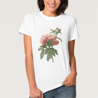 peony (Paeonia sp.) by Redouté Tshirts