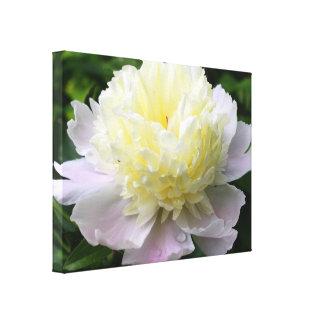 Peony Perfection Photography Canvas Print
