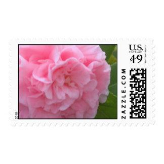 Peony Postage Stamps
