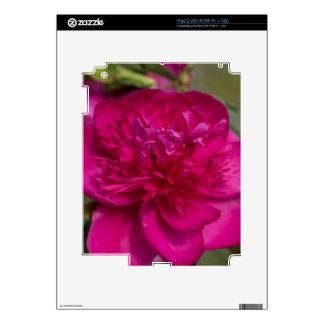 Peony rosado apasionado calcomanía para el iPad 2