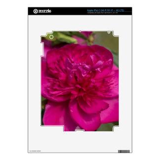 Peony rosado apasionado iPad 3 skin