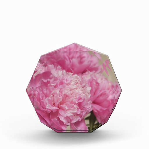 Peony rosado con el premio rosado de la cinta