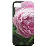 Peony rosado doble - fotografía iPhone 5 protectores