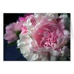 Peony rosado felicitaciones
