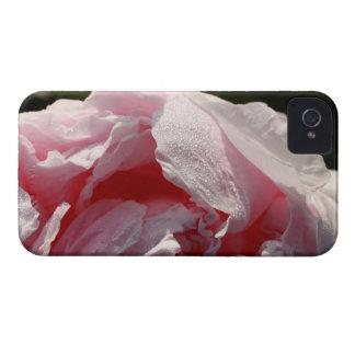 peony rosado iPhone 4 Case-Mate coberturas