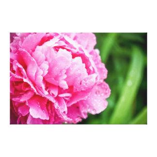peony rosado impresión en lienzo