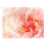 Peony rosado mullido bonito tarjeta postal
