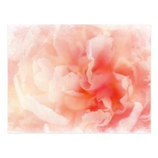 Peony rosado mullido bonito tarjetas postales