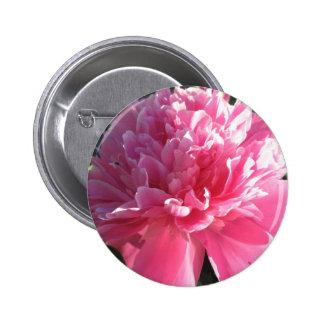 Peony rosado pins