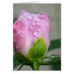 Peony rosado tarjeta