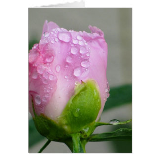 Peony rosado tarjeta pequeña