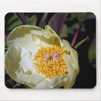 Peony Rose Mouse Pad