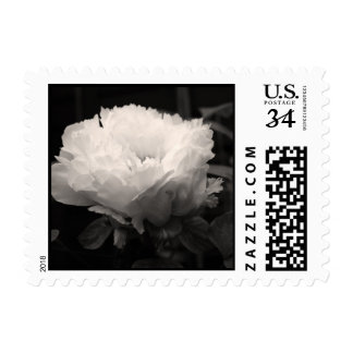 Peony Sepia Floral Photography Postage