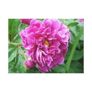 Peony Sprinkled with Dew Canvas Print