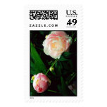 Peony Stamps
