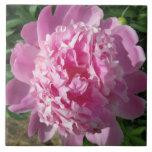 Peony Sun rosado Azulejos