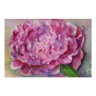 Peony Watercolor Poster