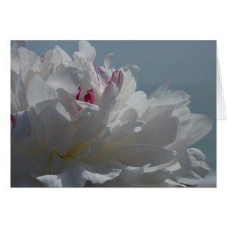 Peony Will Travel Card