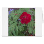Peony y flores azules tarjeta