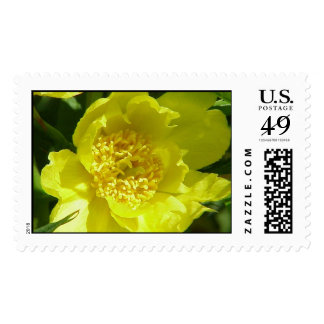 Peony (Yellow) Stamps