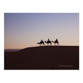 People riding camels, Morocco Postcard