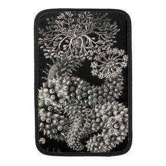 Pepinos de mar de Ernst Haeckel Thuroidea Funda MacBook