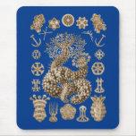 Pepinos de mar tapete de raton