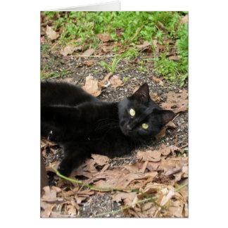 Pepper Cat Katrina Survivor Card