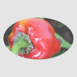 Pepper Garden Mix Stickers