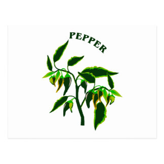 Pepper green plant graphic with word pepper postcard